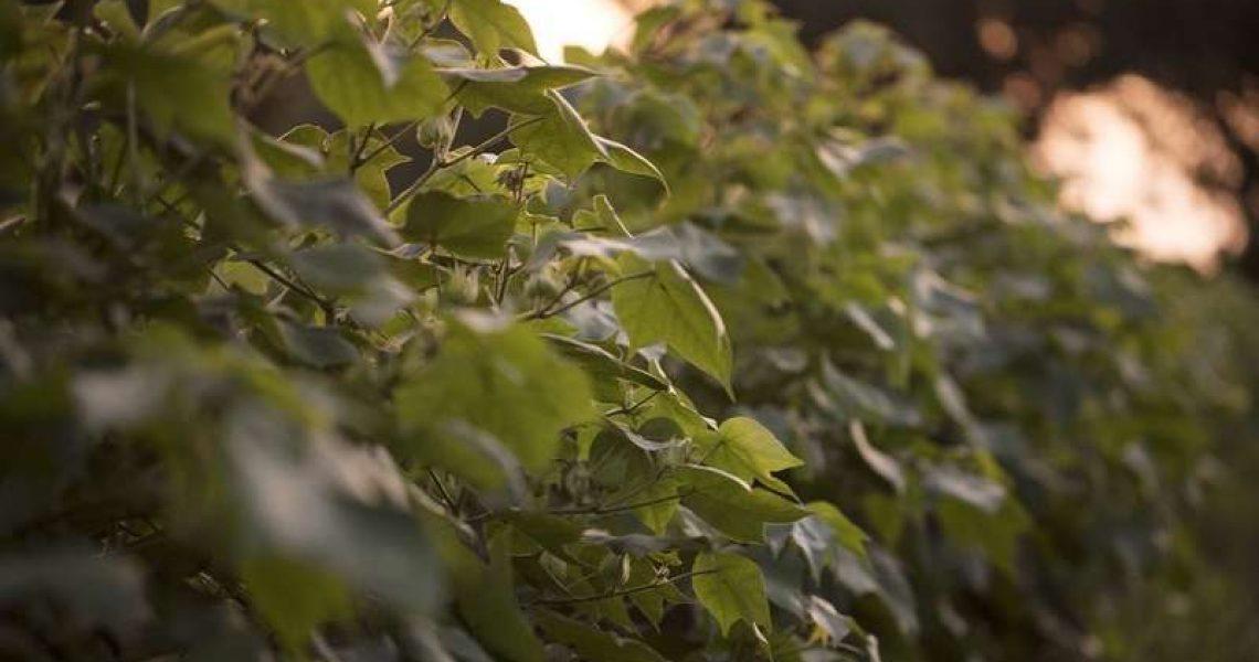 feuilles arbre nature